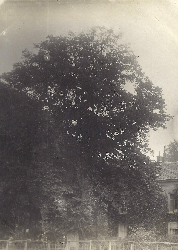 """Deze Linde heeft aan de westzijde van """"Valkenburg"""" gestaan tot in de jaren `50 van de twintigste eeuw, waarna het als beeldengroep voorbestond bij het verzorgingstehuis """"Bosrand"""" aan de Oranjeweg in Oosterbeek. (Zie bij Heijbroek)"""