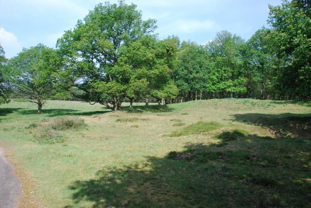 De heuvel waarop de verwoeste kerk van Wolfheze stond.