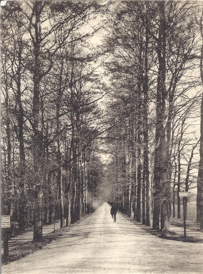 De Hoofdlaan nabij de Rijksstraatweg in noordelijke richting gezien.